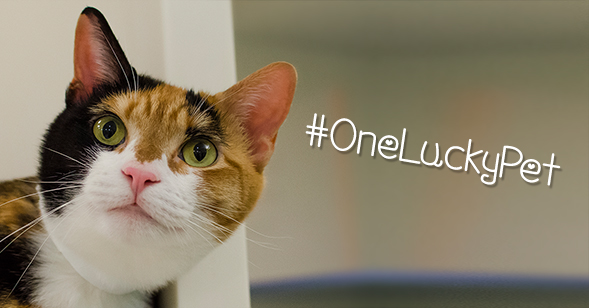 "Just in Time for St. Patrick's Day: Enter our ""One Lucky Pet"" Contest!"