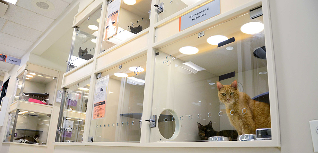 the issue of overcrowded animal shelters in the united states Of overcrowded and underfunded animal shelters in the united states  will help bring light to the issue of overcrowded and underfunded animal shelters.