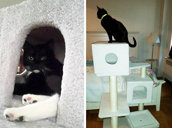 Kindred Kitties: Jordan and Fish's Happy Tail