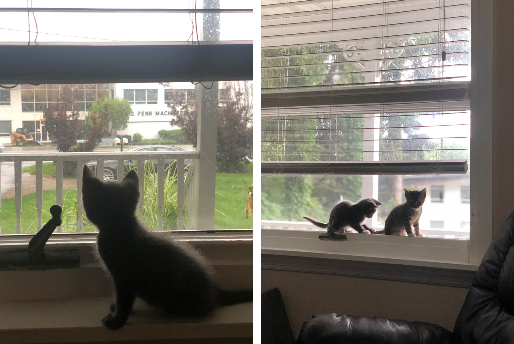 Kittens on windowsill