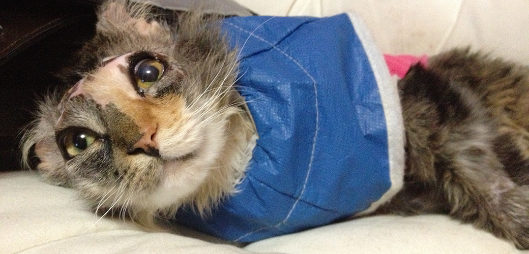 Cat Survives Severe Chemical Burns