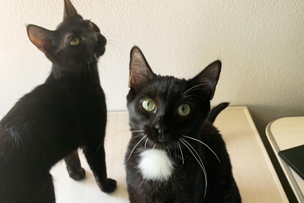 Lala and Miu Miu
