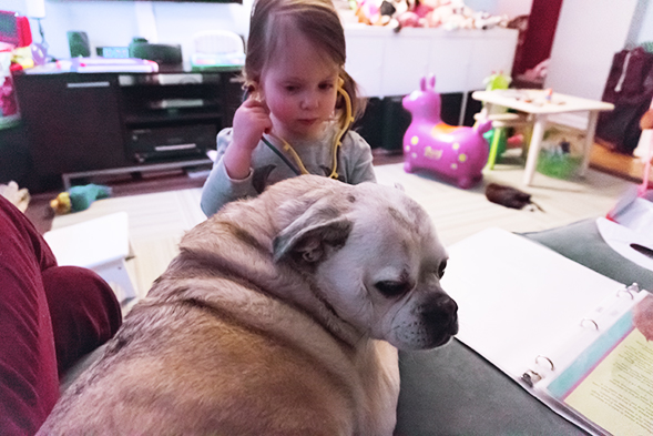 Little girl playing doctor and listening to dog's heart beat