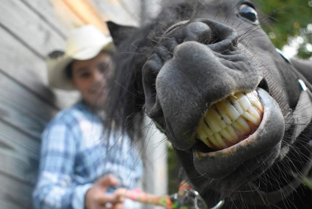 Horse smiling at camera