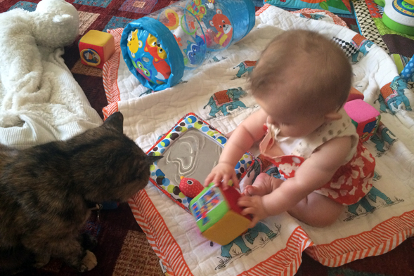 Cat and baby playing with toys