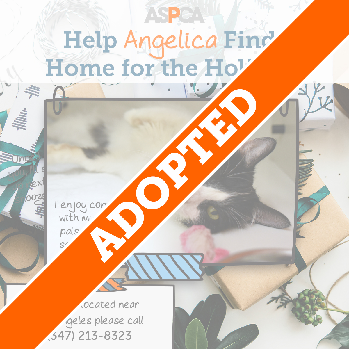 Angelica Adopted