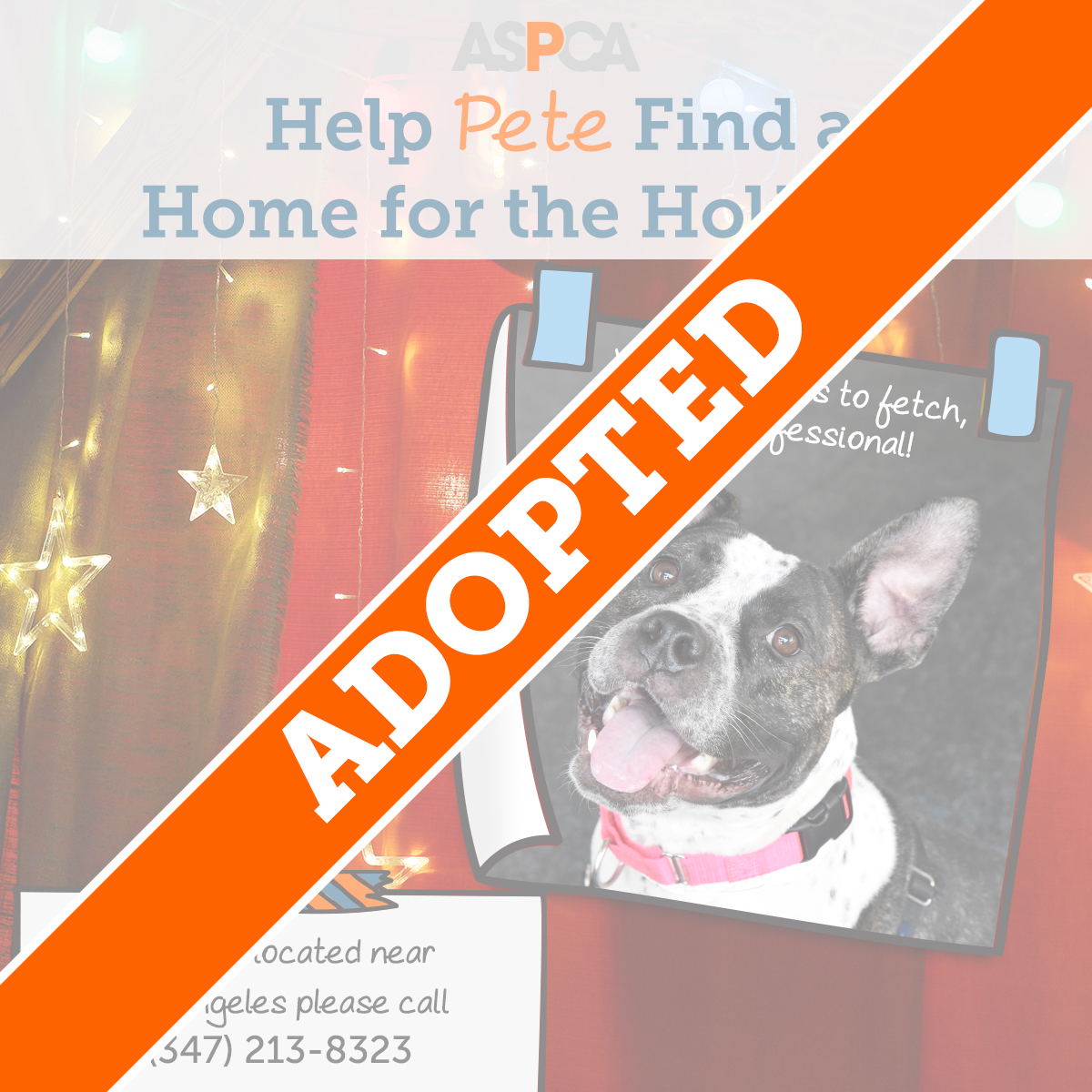 Pete Adopted