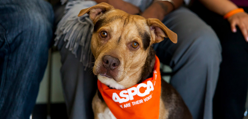 ASPCA Community Engagement Program in Los Angeles