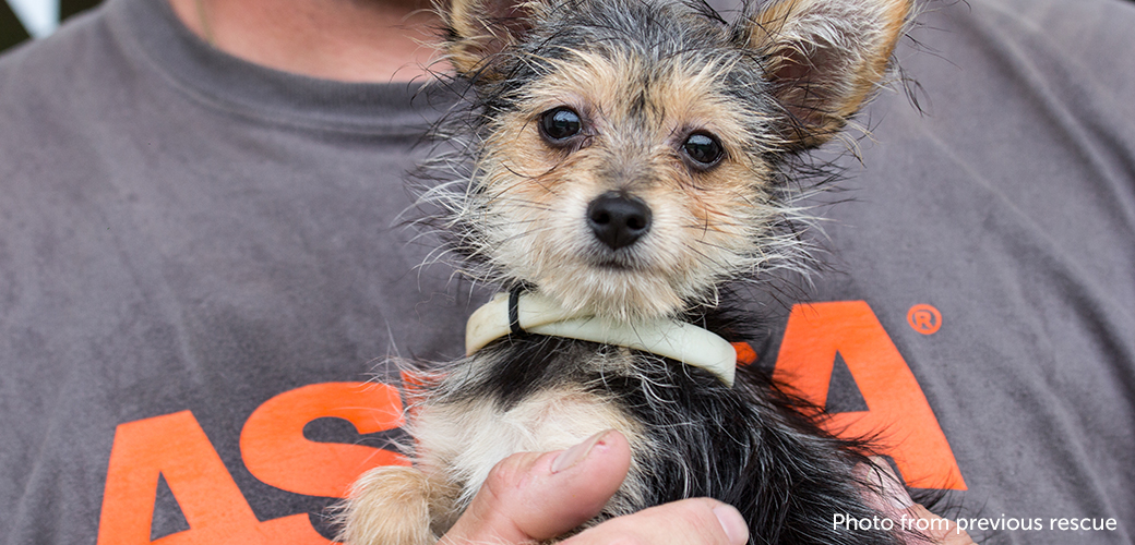 ASPCA Readies Responders for Hurricane Matthew