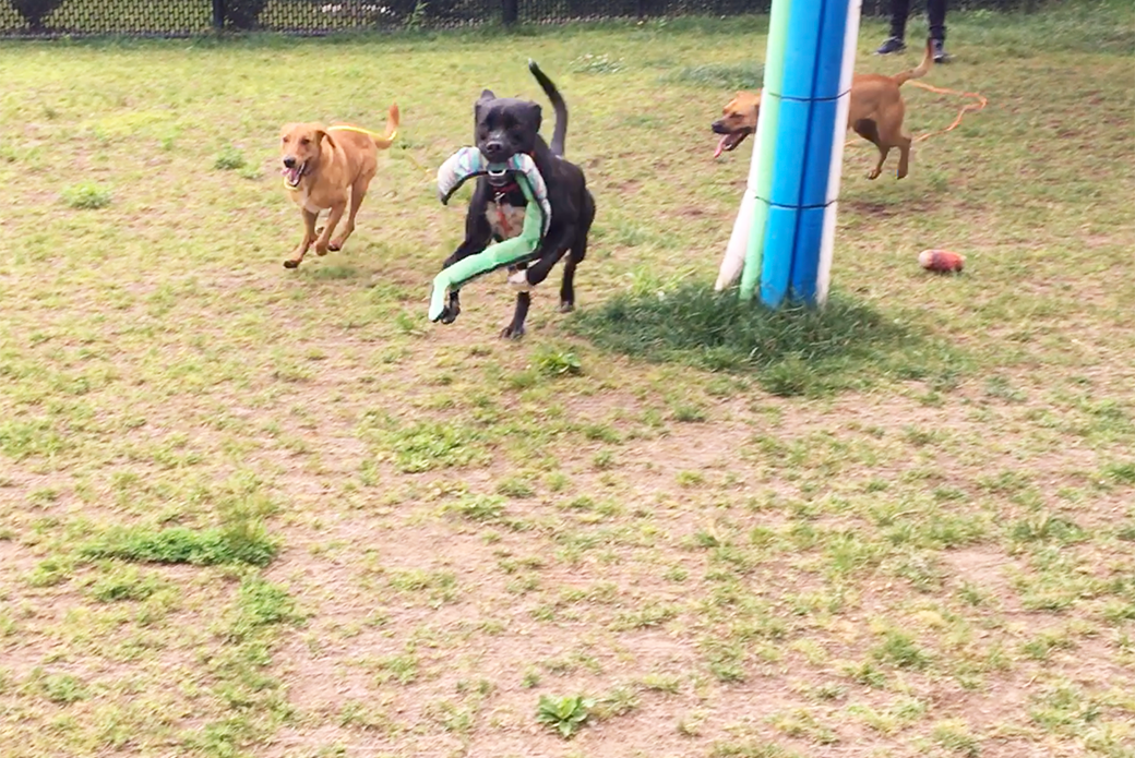 Matilda playing with dog friends