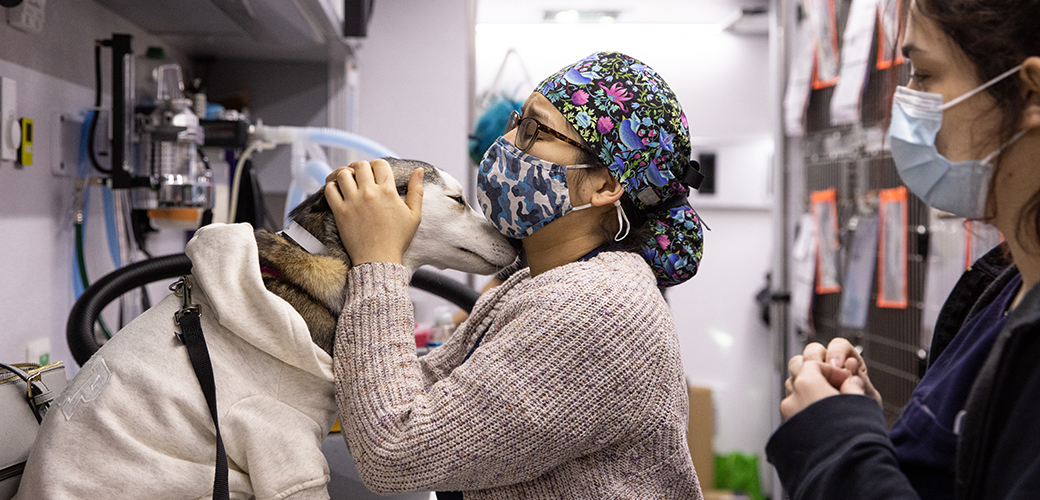 animal welfare worker with a dog in a mobile clinic