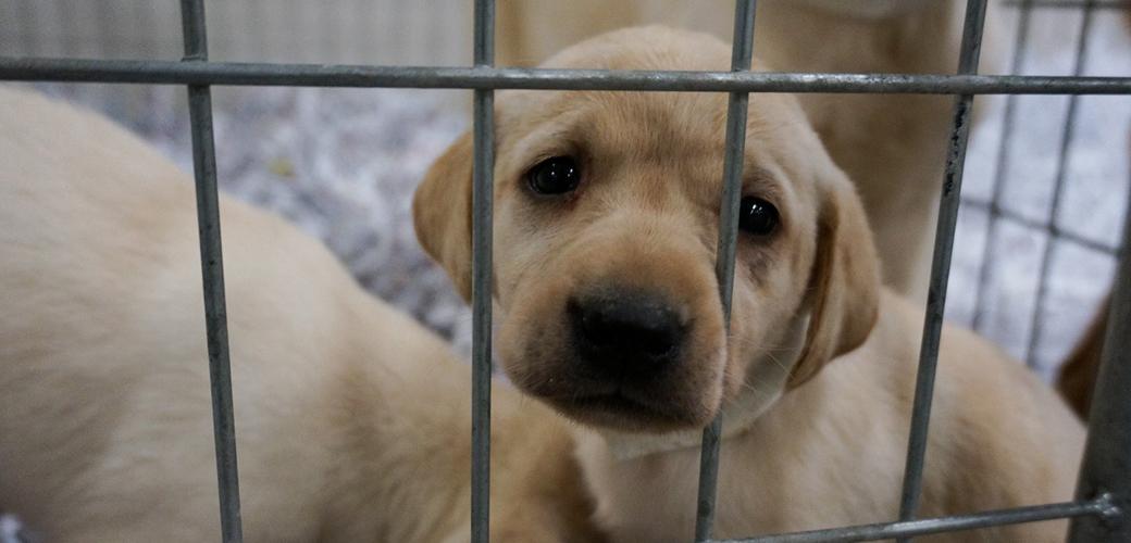 puppy in a metal crate