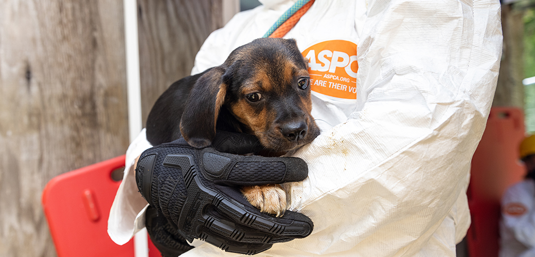 a puppy carried by an ASPCA responder