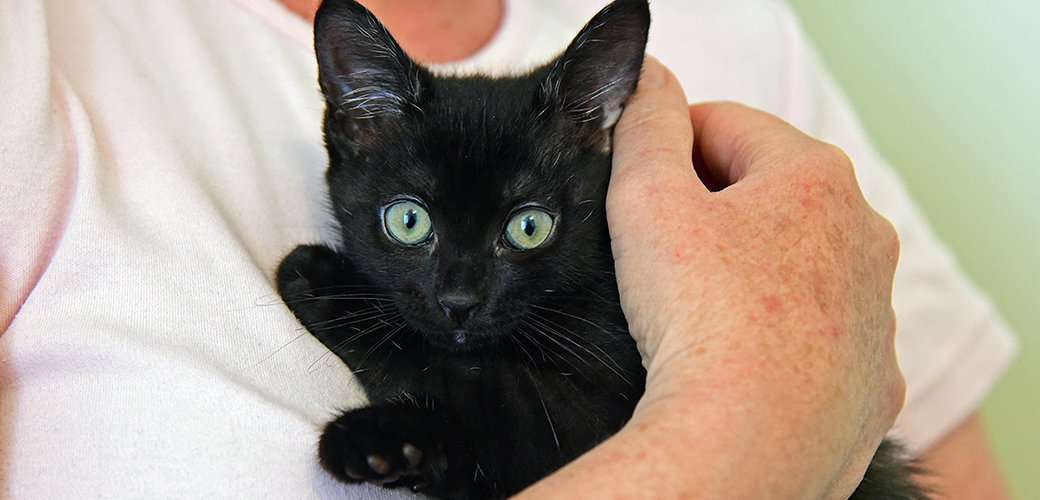 a person holding a black kitten
