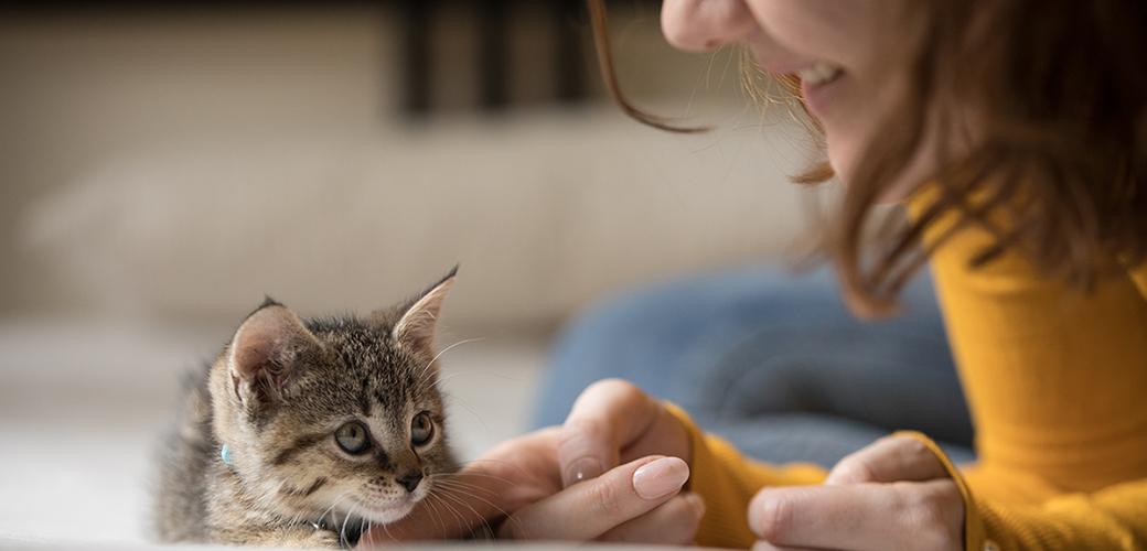 grey tabby kitten being pet by woman in golden sweater