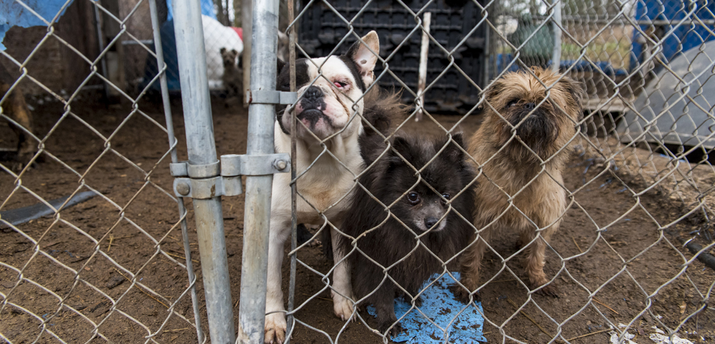 three dogs in a muddy pen
