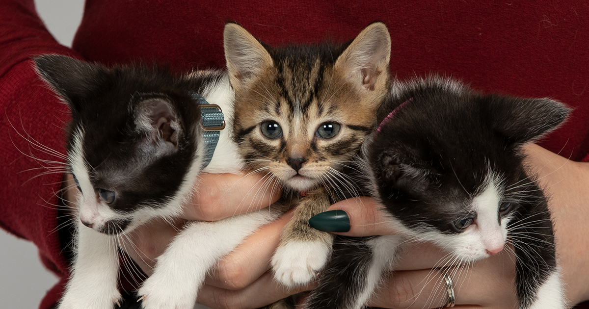 Meet Cuddly Kittens Near You!