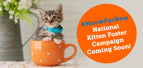 #MeowforNow Kitten Foster Campaign Coming Soon