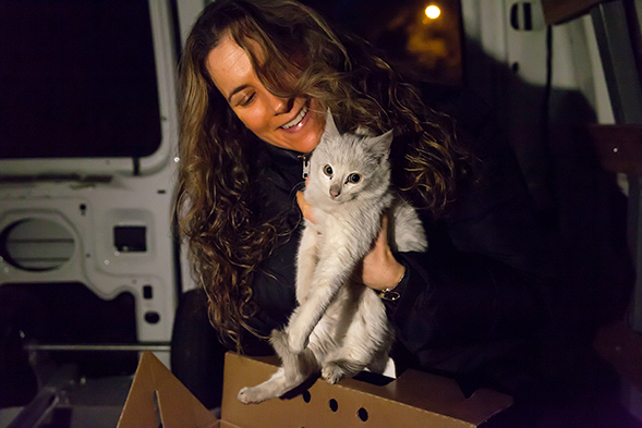 """Miracle"" Kitten Survives Ride Under Car Hood in Freezing Temperatures"