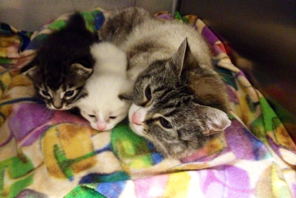 Mother's Day Miracle: Montana Shelter Uses ASPCA's Lil BUB Funds to Rescue a Cat and Her Kittens