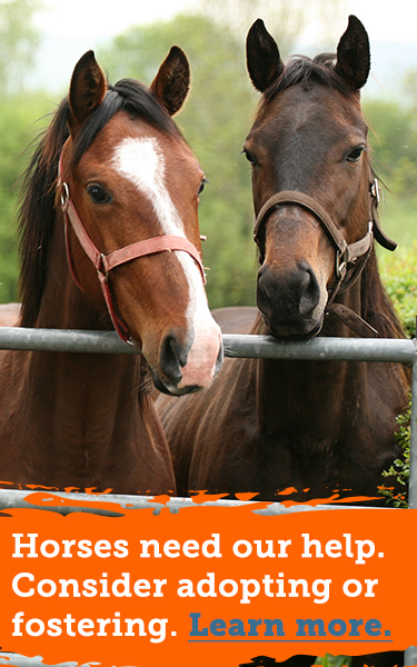Foster or adopt horses