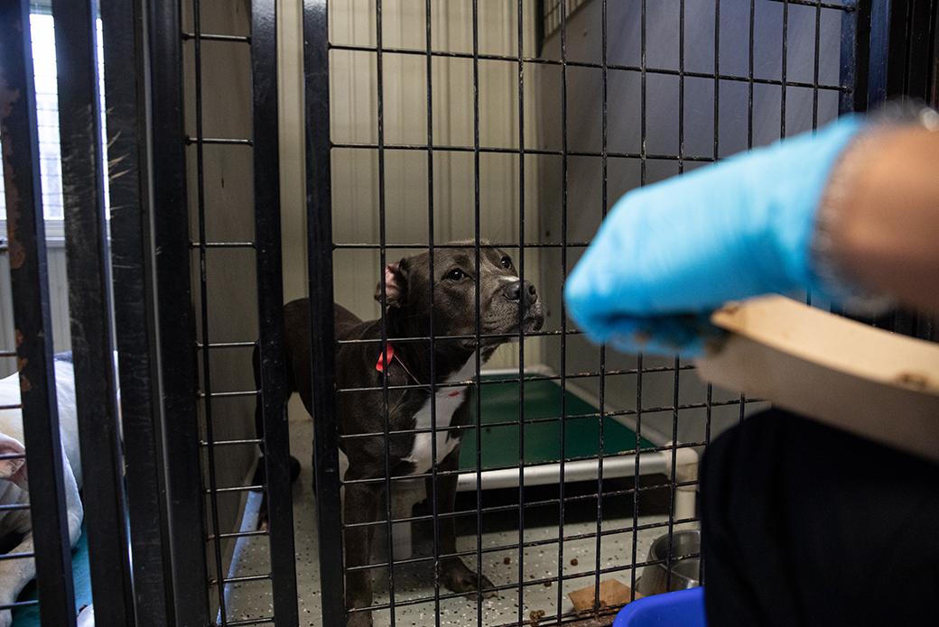 Person feeding dog through crate