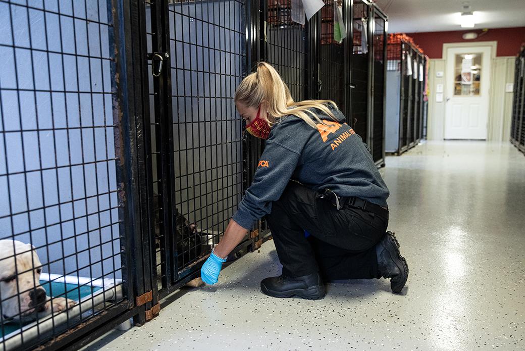 Woman feeding dog through crate