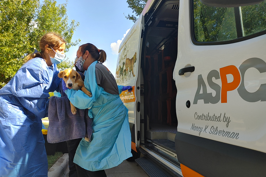 Responders helping dog into van