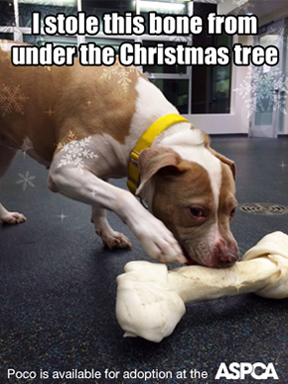Special Holiday Event: Bring Home a New Pet and Enjoy Discounted Adoption Fees at the ASPCA!