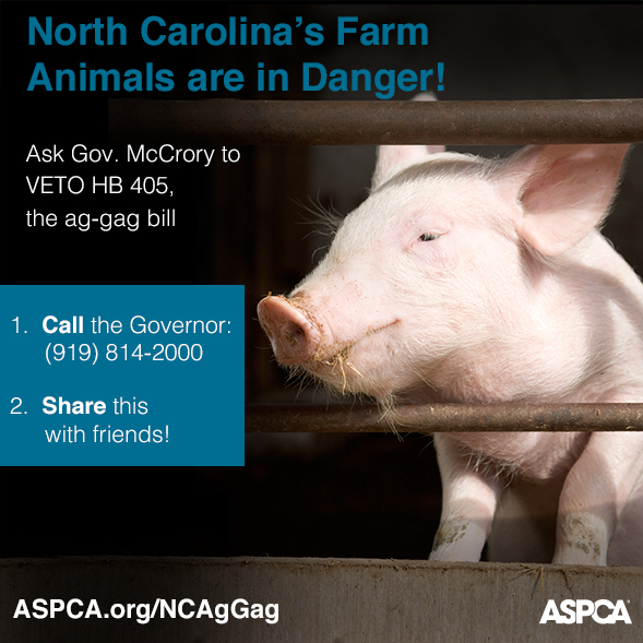 Help! What Happens on North Carolina Farms Does Not Stay in North Carolina