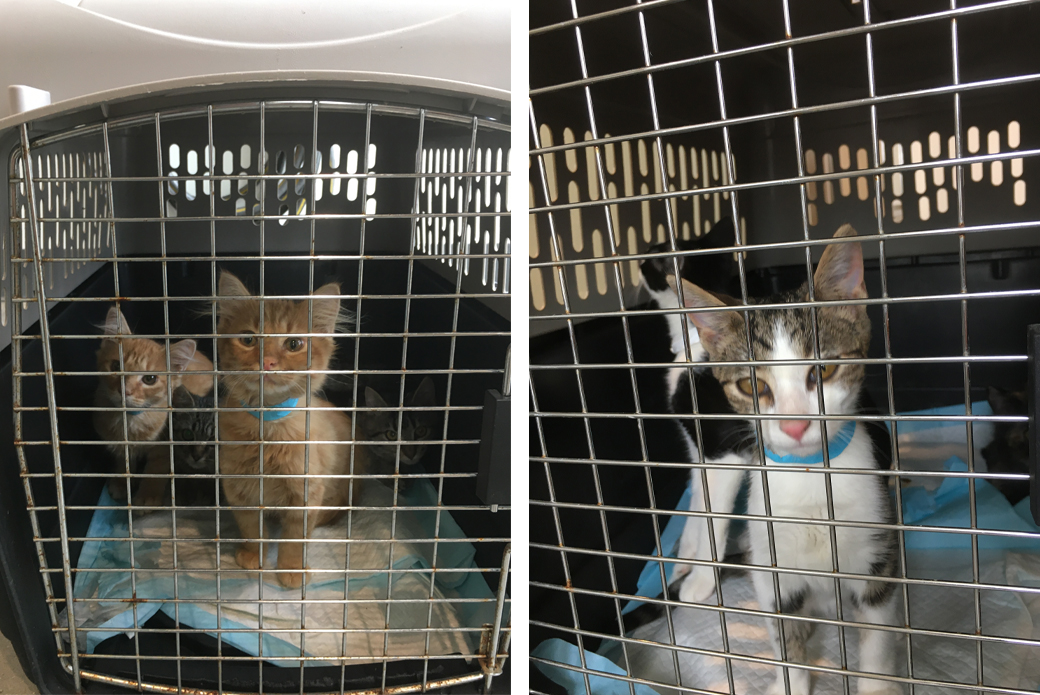 Kittens in carrier