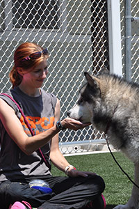 ASPCA behaviorist plays with husky