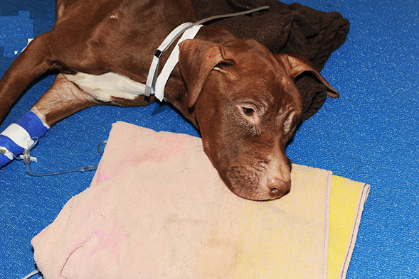 New York City Dog Left to Starve to Death in Suitcase: ASPCA Offers $20,000 Reward for Information Leading to Arrest