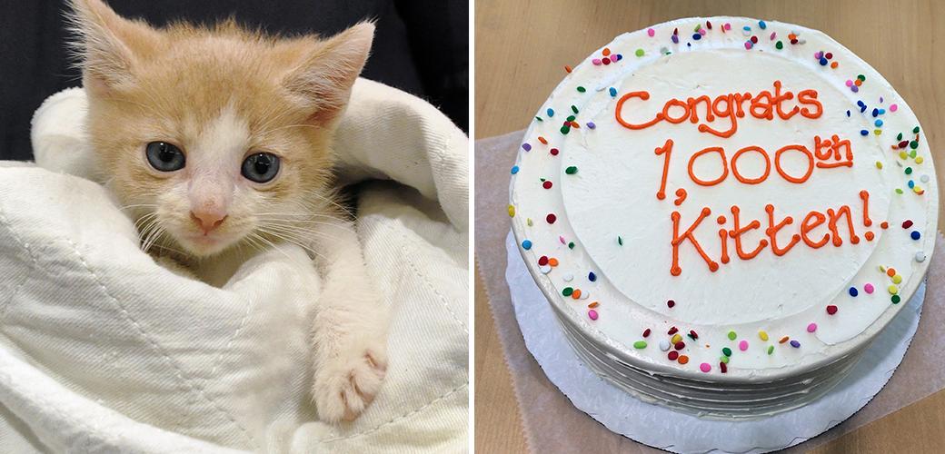 1000th kitten
