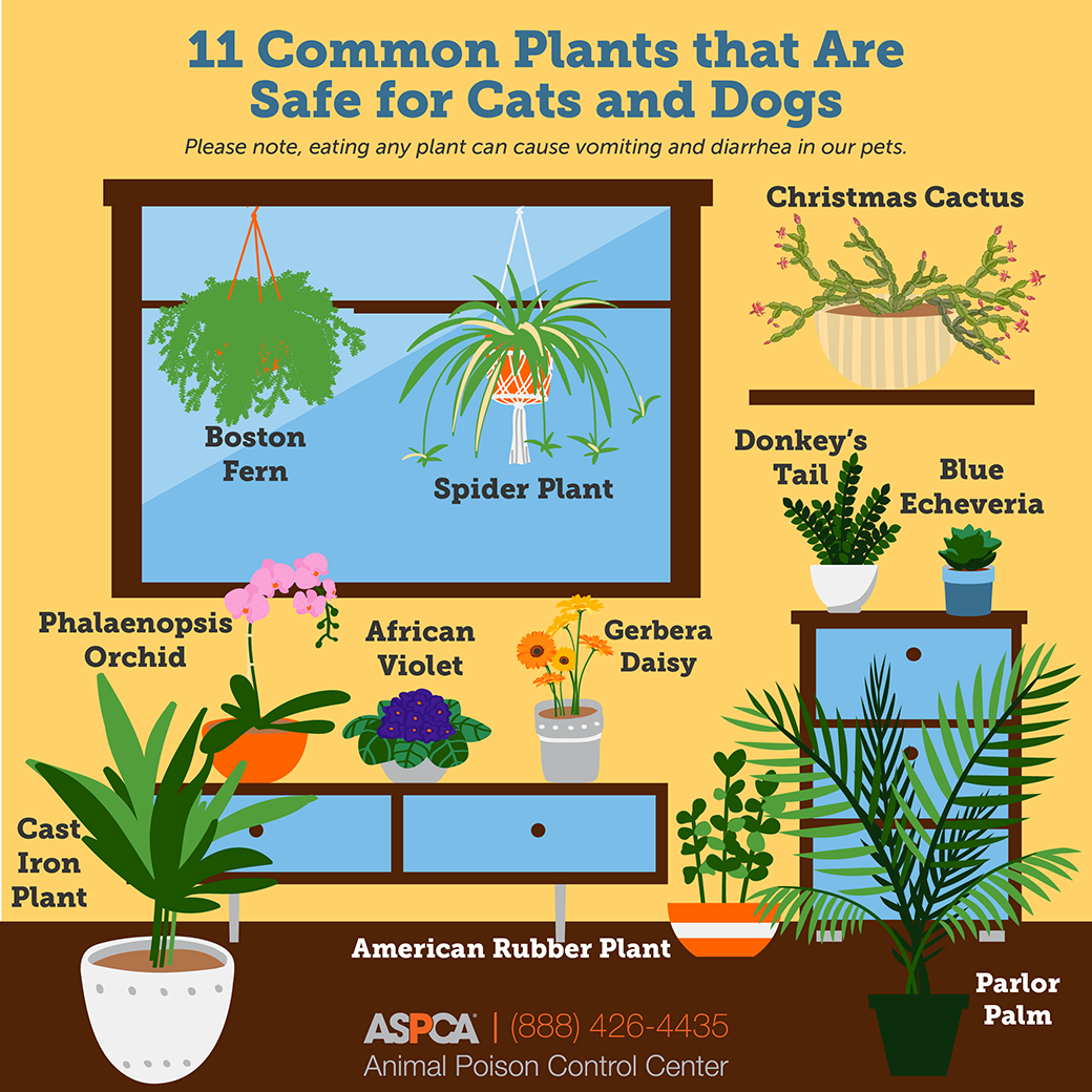 Liven Up Your Space With These Pet Friendly Plants Aspca