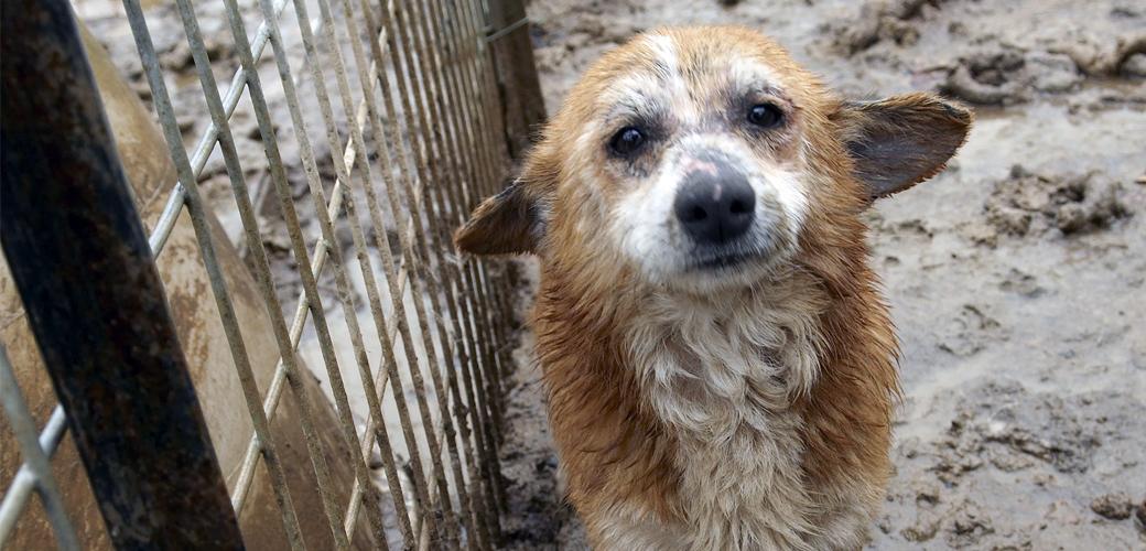 Puppy in mud