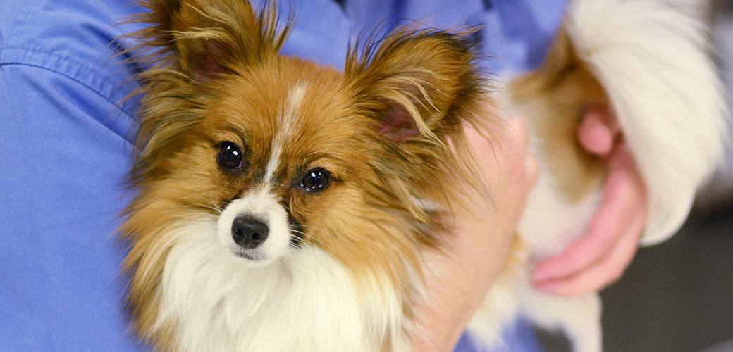 ASPCA Animal Hospital Externship Program