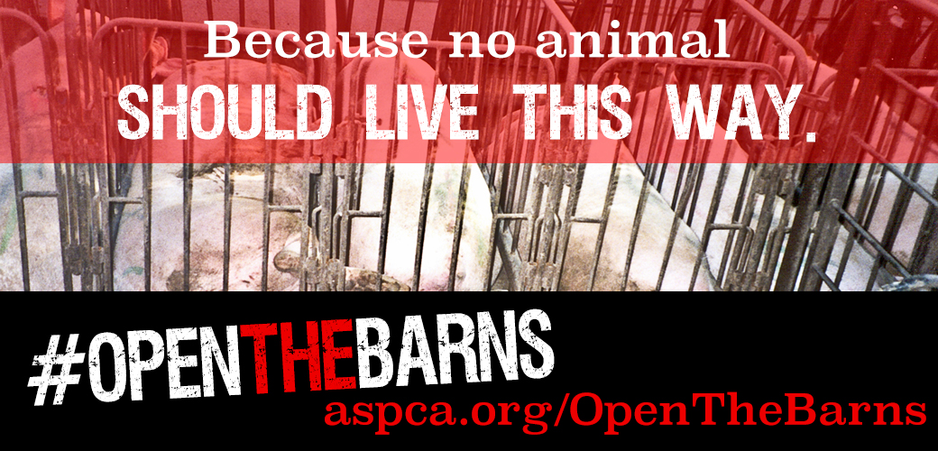 What's Your Reason to #OpenTheBarns? Speak Out Against Cruelty to Farm Animals!