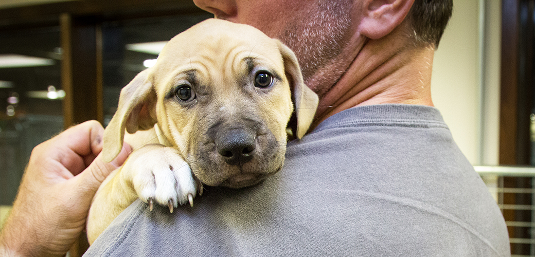 What Are Cost of Care Laws and How Do They Work? | ASPCA