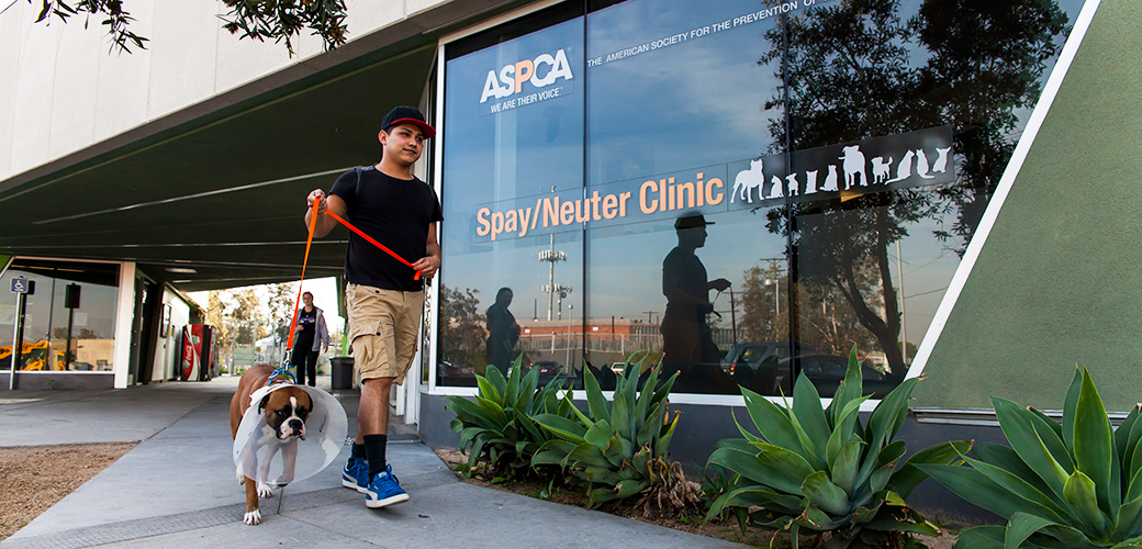 LA Spay/Neuter Clinic