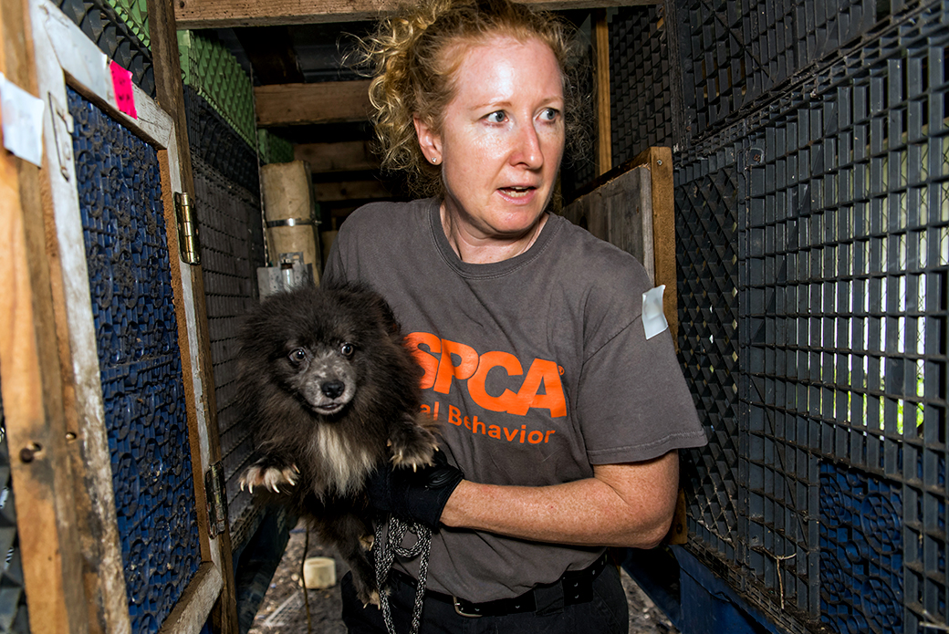 FIR team member carrying dog - Clewiston FL Puppy Mill