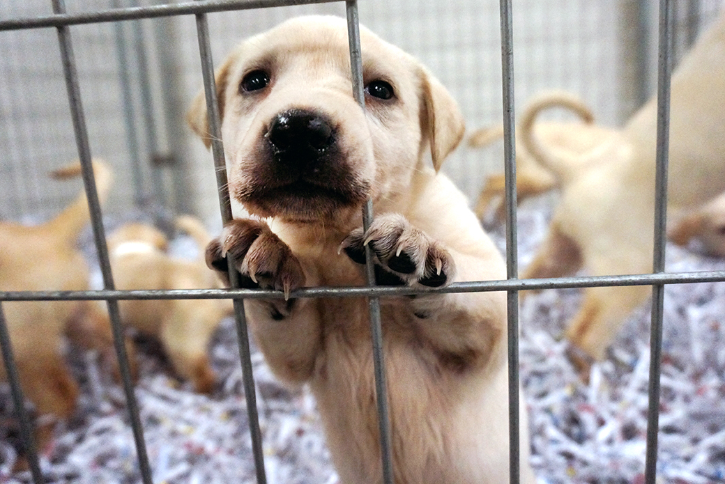 puppy - Pierce County Puppy Mill