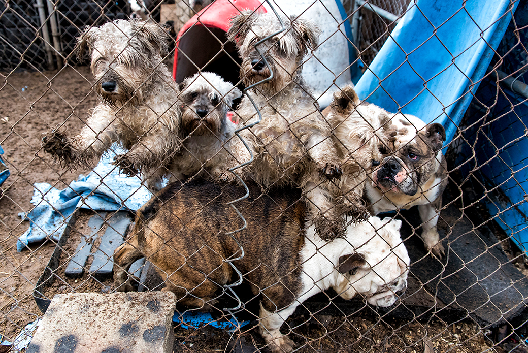 dogs covered in mud - MI Puppy Mill