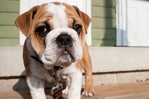 Become an ASPCA Guardian