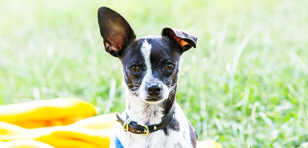 blog tampa dog training