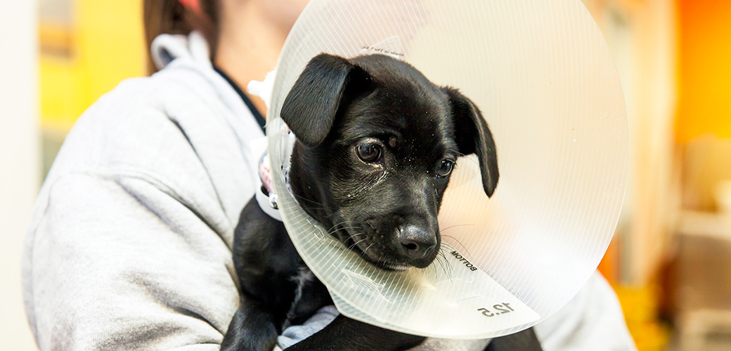Top 10 reasons to spay and neuter your pets