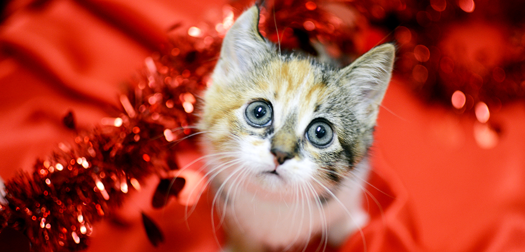 experts see a rise in cases around february 14 many involving chocolate or lilies a flower thats potentially fatal to cats valentines day can be as - Cat Valentines Day