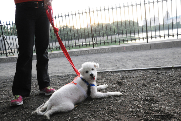 curly white dog laying down on ground
