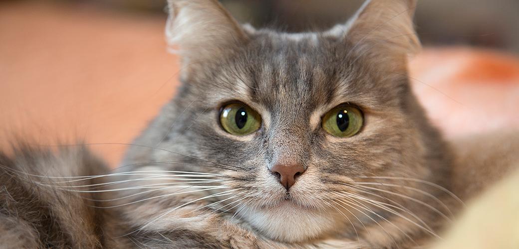 Pet Trust Primer | ASPCA