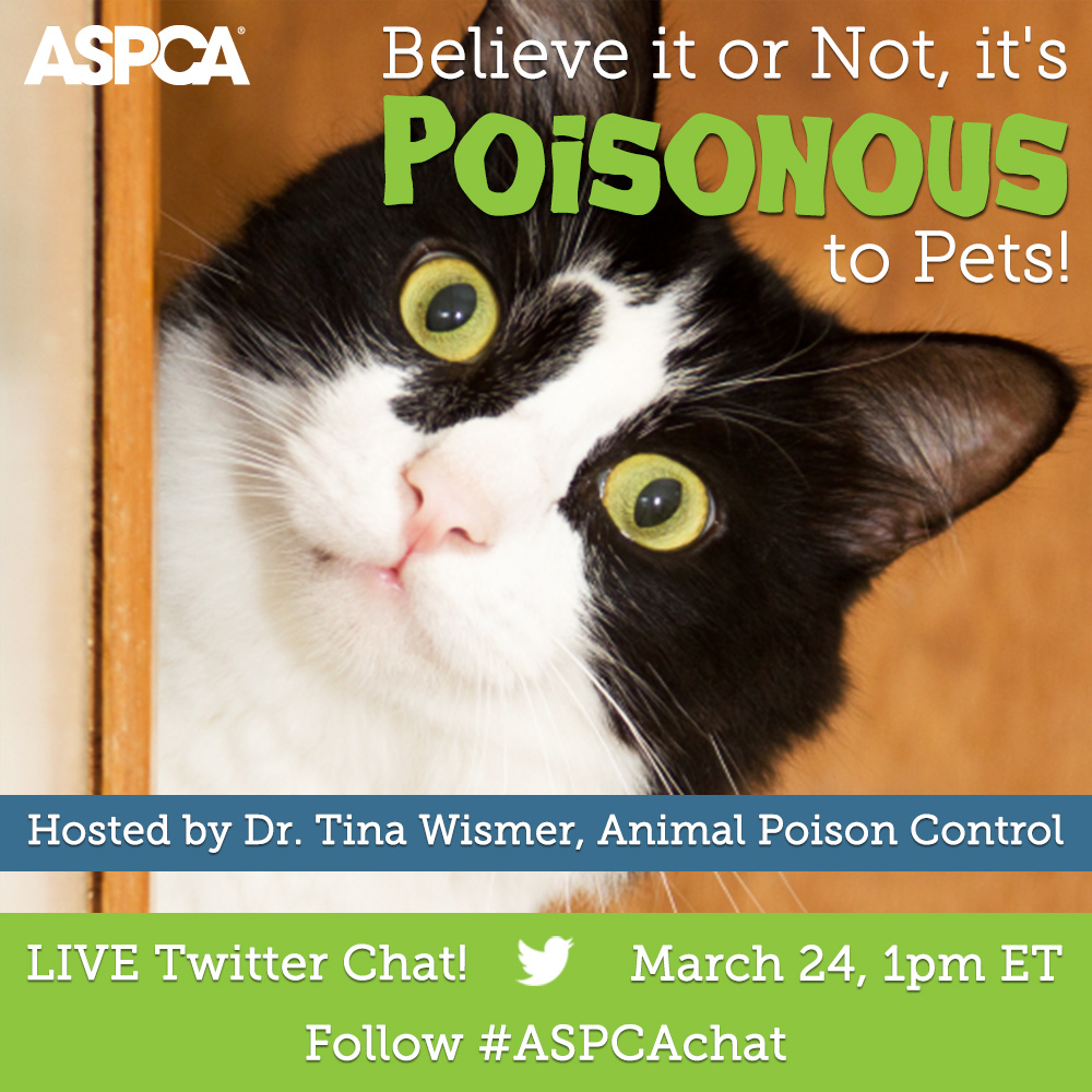 Join Our Poison Prevention Twitter Chat on Thursday, March 24!
